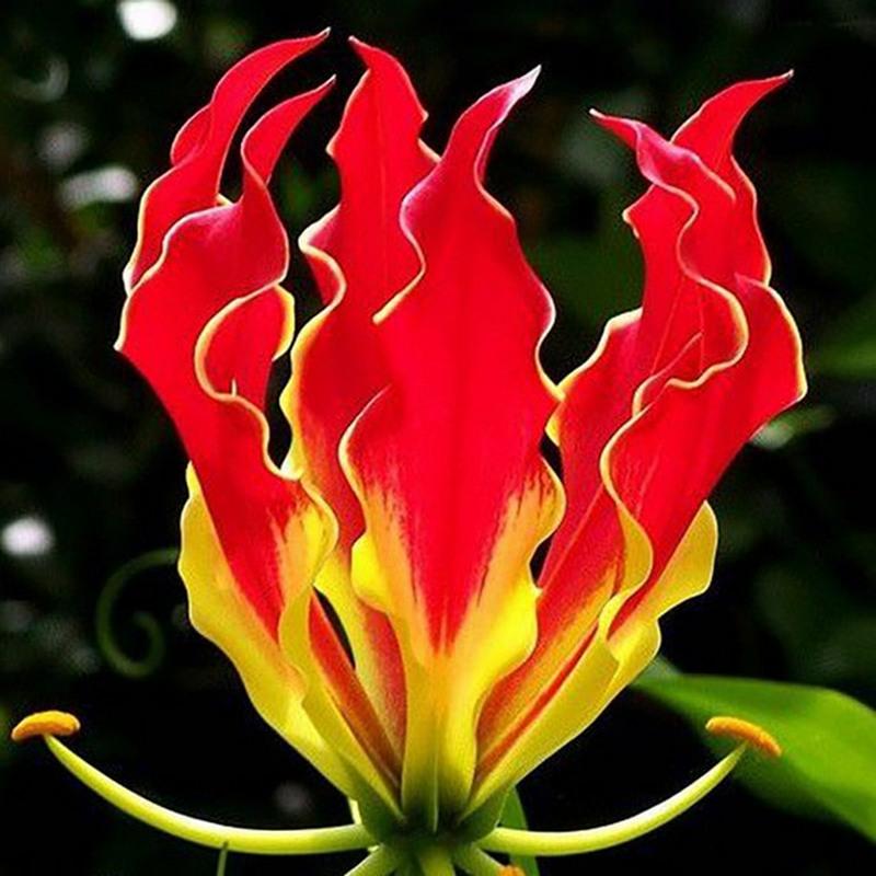6 Bunga Indah yang Kini Keberadannya Menjadi Langka